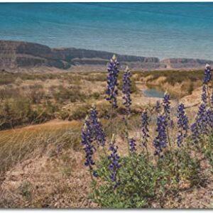 Big Bend National Park Blue Bonnet Flower Poster