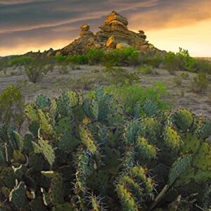 Big Bend National Park Chihuahuan Desert Poster