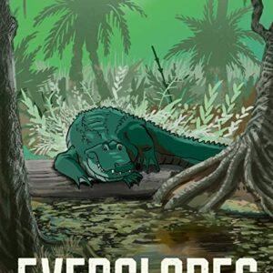 Everglades National Park Florida Alligator Poster