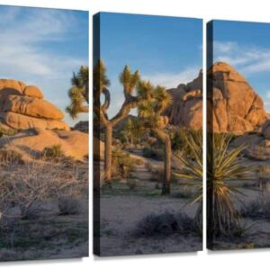Joshua Tree National Park 3 Panel Print