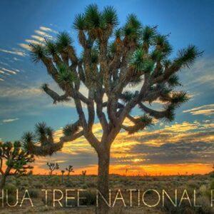 Joshua Tree National Park California Wall Art