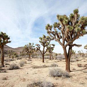 Joshua Tree National Park Desert Art Print