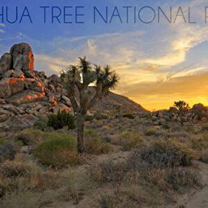 Joshua Tree National Park Sunrise Photo
