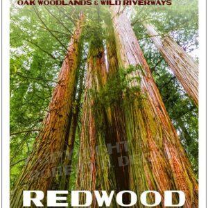 National Park Service Redwood National Park Poster