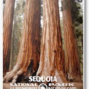 National Park Service Sequoia National Park Print
