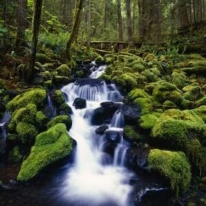 Olympic National Park Waterfall Print