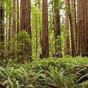 Redwood National Park California Print