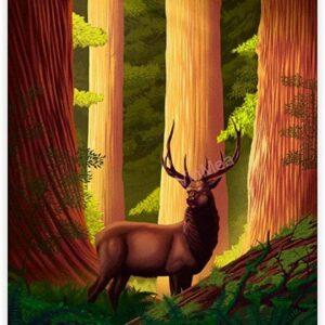 Redwood National Park Deer Poster