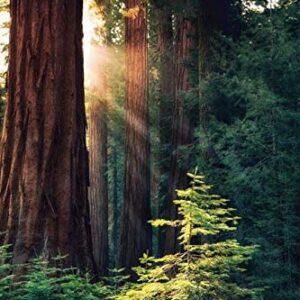 Redwood National Park Sunrise Print