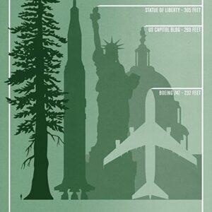 Sequoia National Park Redwood Comparison Poster