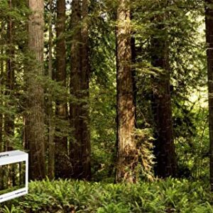 300 Piece Redwood National Park Puzzle