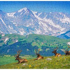 300 Piece Rocky Mountain National Park Puzzle