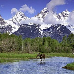 Grand Teton National Park Moose And River Jigsaw Puzzle
