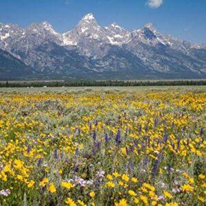 Grand Teton National Park Wildflowers Puzzle