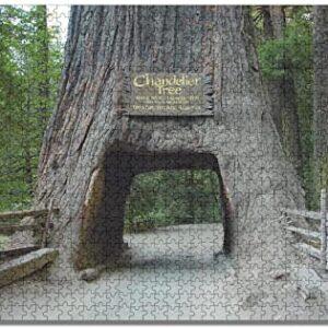 Redwood National Park Chandelier Tree Puzzle
