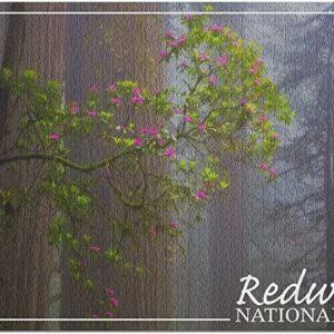 Redwood National Park Forest Puzzle