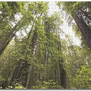 Redwood National Park Jigsaw Puzzle