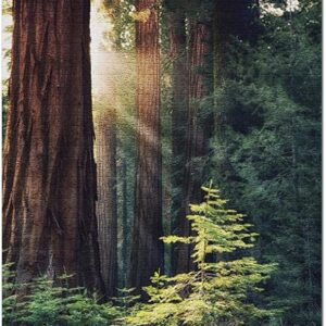 Redwood National Park Redwood Trees Jigsaw Puzzle