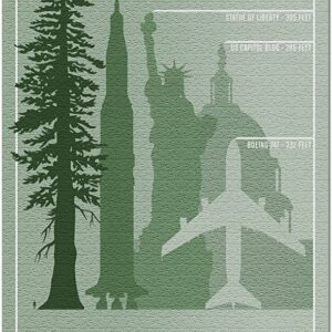 Redwood National Park Tree Size Puzzle
