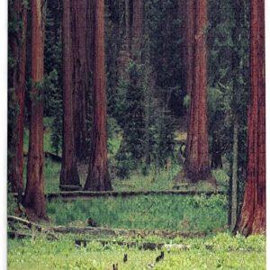 Sequoia National Park Bear Puzzle