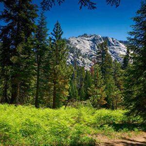 Sequoia National Park California Jigsaw Puzzle