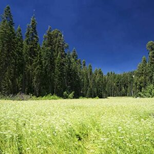 Sequoia National Park Field Puzzle