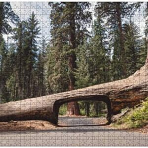 Sequoia National Park Tree Tunnel Puzzle