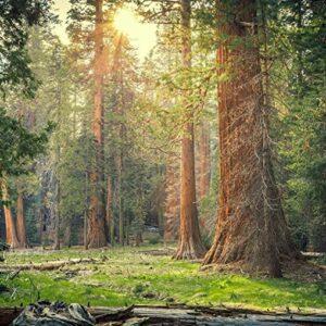 Wooden Sequoia National Park Puzzle