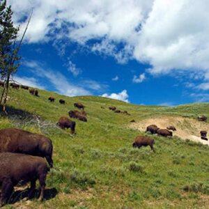 Yellowstone Hayden Valley Bison Puzzle