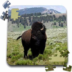 Yellowstone National Park Bison Puzzle